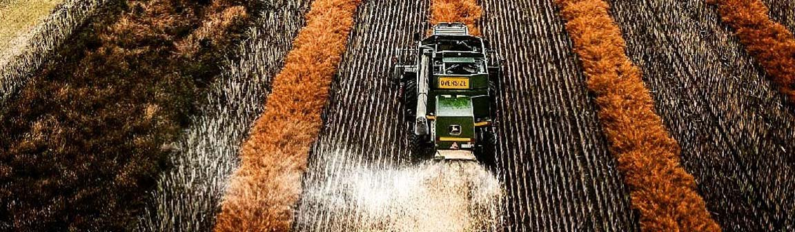 IKCaldwell-agronomy-agriculture-services-harvest